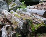 Wald im Saas (8)